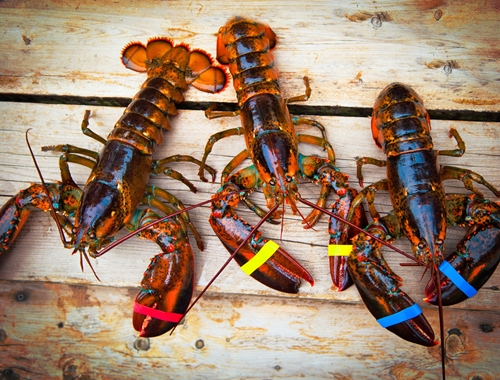 3 important considerations for reducing lobster tank shrinkage